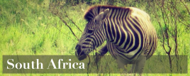 africa - south africa